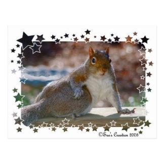 Got Attitude? Squirrel Postcard