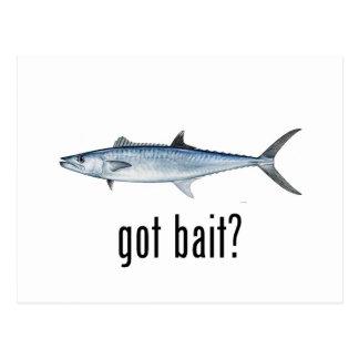 Got Bait? - King Mackeral Postcard