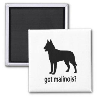 Got Belgian Malinois Magnets