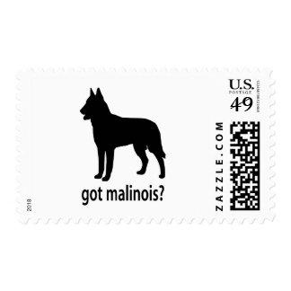 Got Belgian Malinois Stamp