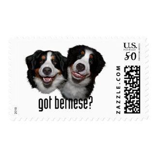 got bernese? postage