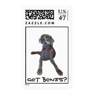 Got bones? Weimaraner Postage Stamp