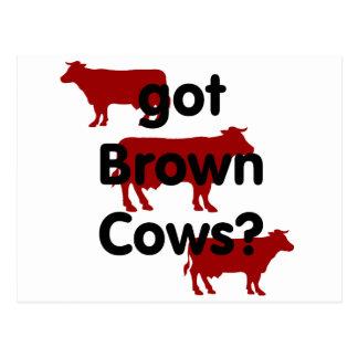 got brown cows postcard