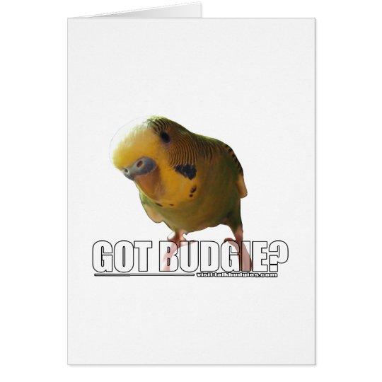 Got budgie? card