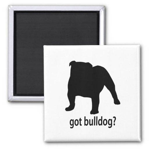 Got Bulldog 2 Inch Square Magnet