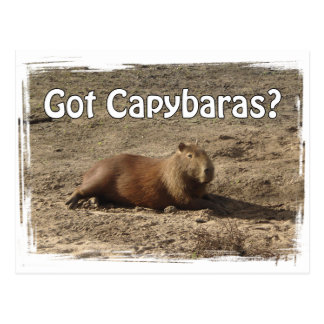 Got Capybaras?  Tees and Gifts Postcard
