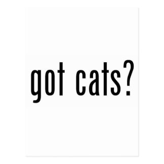 got cats? postcard