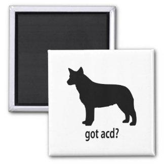 Got Cattle Dog 2 Inch Square Magnet