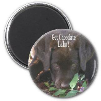 Got Chocolate Labs?  Puppy 2 Inch Round Magnet