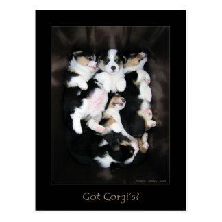 Got Corgi's? Postcard