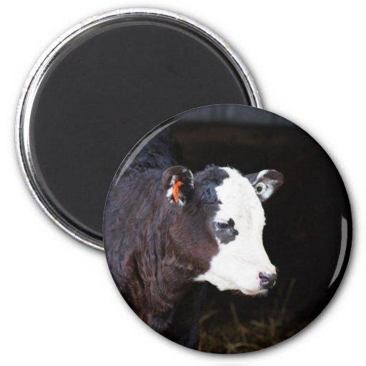Got Cow Fridge Magnet