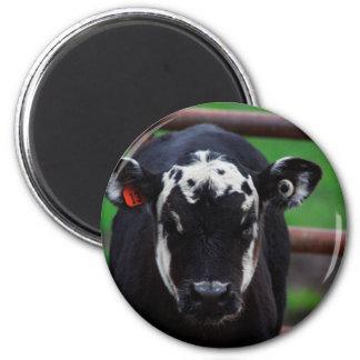 Got Cow Magnet