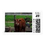 Got Cow Postage Stamp