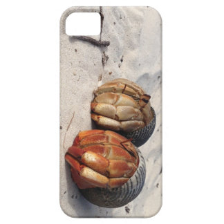 Got Crabs? iPhone SE/5/5s Case