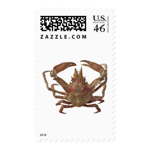 Got Crabs? nice sea crab-dinner time Stamp