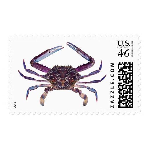 Got Crabs? nice sea crab-dinner time Postage Stamp