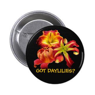 GOT DAYLILIES? BUTTON