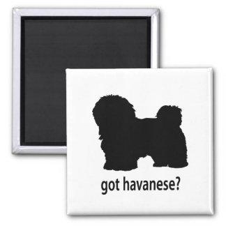 Got Havanese 2 Inch Square Magnet