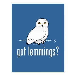 got lemmings? postcard