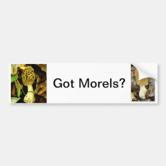Got Morel Mushrooms Bumper Sticker