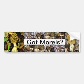 Got Morels Mushrooms Bumper Sticker Car Bumper Sticker