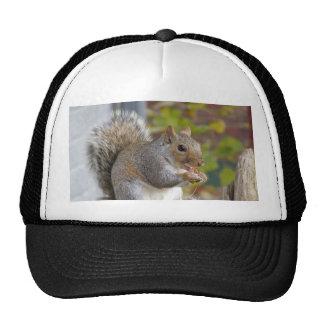 Got nuts? hat