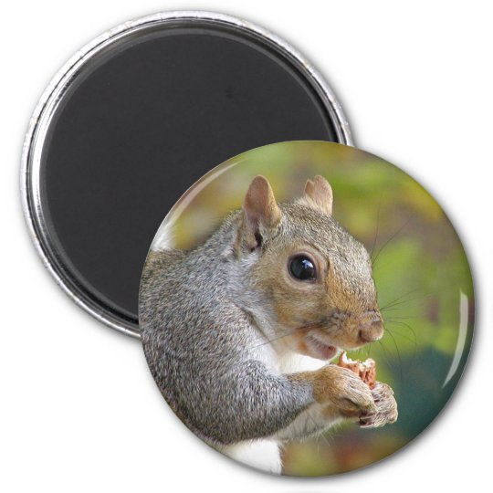 Got nuts? magnet