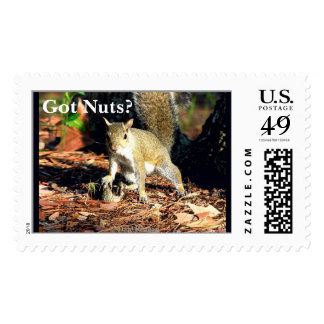 Got Nuts? Stamps