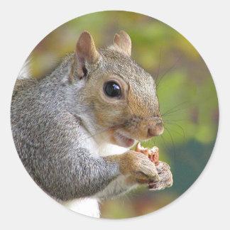 Got nuts? sticker