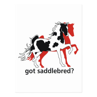 Got Saddlebred? Postcard