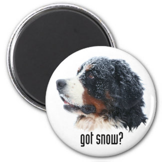 got snow?  Bernese Magnet