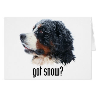 got snow? Bernese Mountain Dog Card