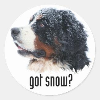 got snow? Bernese Mountain Dog Classic Round Sticker