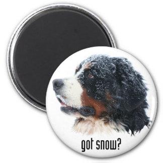 got snow? Bernese Mountain Dog Magnet