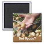 Got Spuds? Refrigerator Magnets