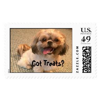 Got Treats? Stamp
