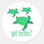Got Turtles? Sticker