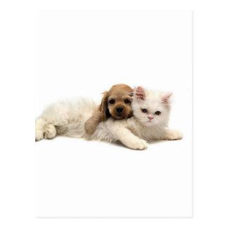 Got Ya!  Puppy Sneeks Up On Kitten Postcard