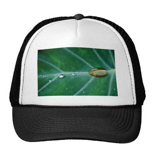 Gota de la lluvia en una hoja verde gorro