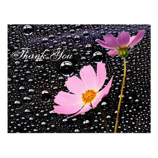 Gota de lluvia con la postal de la flor del cosmos