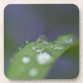 Gotas de agua del jardín posavasos de bebidas