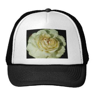 Gotas de agua en el rosa blanco de Champán floral Gorro