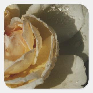 Gotas de agua en el rosa blanco poner crema de Cha