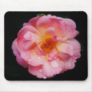 Gotas de agua en la foto color de rosa rosada de l