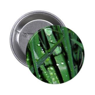 Gotas de agua en la hierba - rocío de la madrugada pin