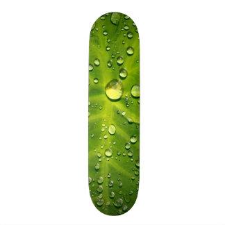 Gotas de agua en la hoja del taro skate board