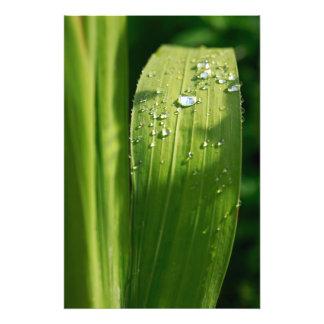 Gotas de agua en la hoja verde arte con fotos