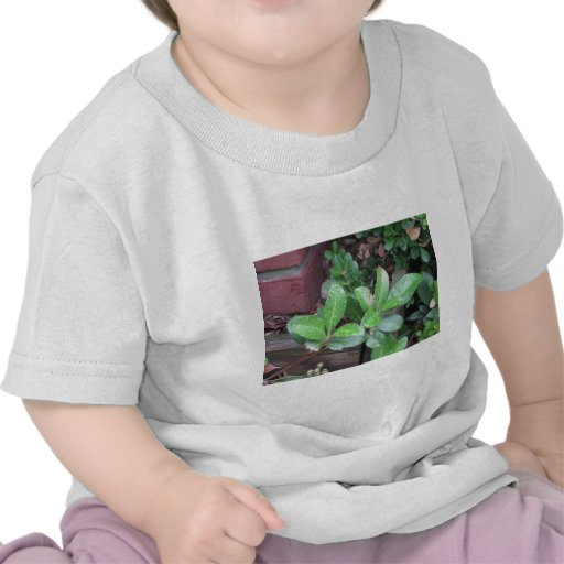 Gotas de agua en las hojas camisetas