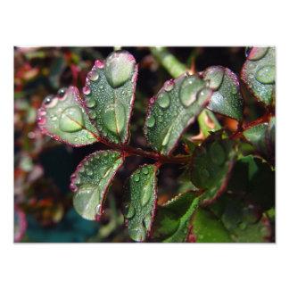 Gotas de agua en las hojas color de rosa del árbol fotografía