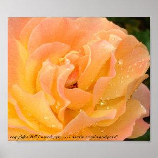 Gotas de agua en los rosas 1 posters